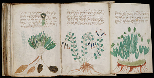 blog-manuscrit-de-voynich-éditions-fractales- par-david-tellier